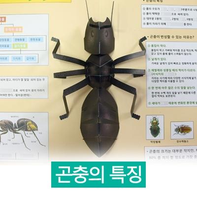 과학 곤충 친구들 (곤충의 특징) DIY 팝업북