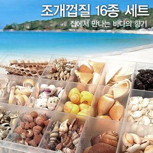 [바다향기 시리즈] 조개껍데기 16종